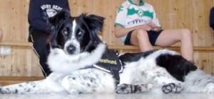 kinder lernen den sicheren umgang mit hunden