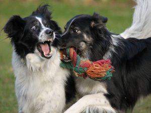 hunde wollen nicht nur kuscheln