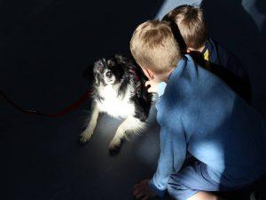 angst vor hunden wir können helfen